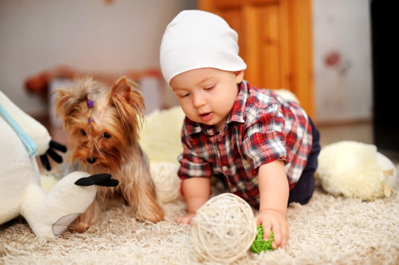 How to Keep Your Carpets Clean with Pets