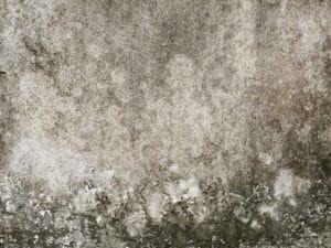 How does mold grow?